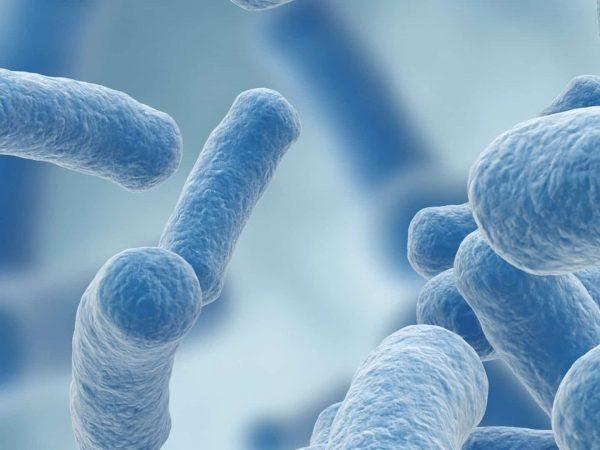 Lactobacillus gasseri perdida de peso repentina