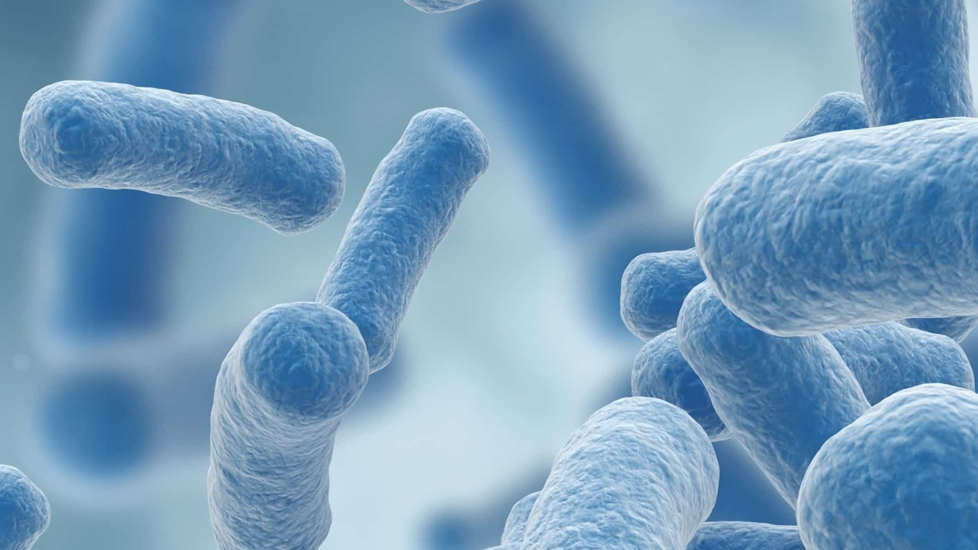 Lactobacillus gasseri: ¿Cuál es el mejor suplemento del 2021?