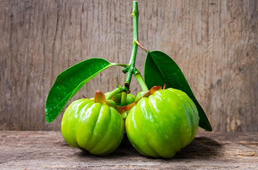 Fruto de la Garnicia cambogia