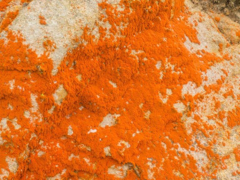 Closeup de alga