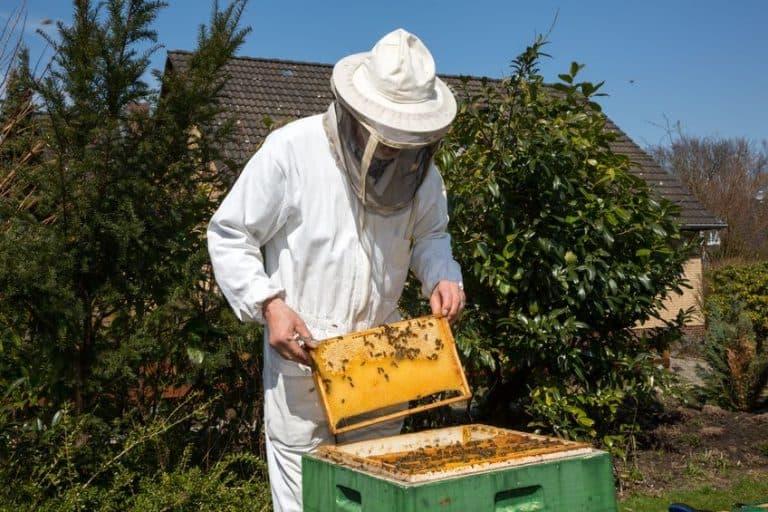 Un apicultor retirando miel
