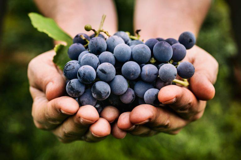 Hombre con uvas en sus manos