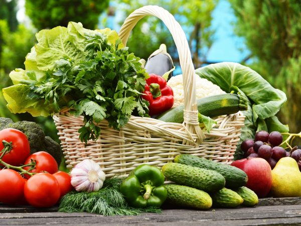 20483486 – fresh organic vegetables in wicker basket in the garden